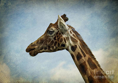Photograph - Reticulated Giraffe Head by Liz Leyden