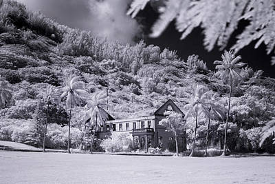 Infra-red Photograph - Retired Palms by Sean Davey