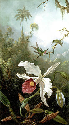 White Orchid Painting - Retouched Masters - Orchid And Hummingbirds In Tropical Forest by Audrey Jeanne Roberts