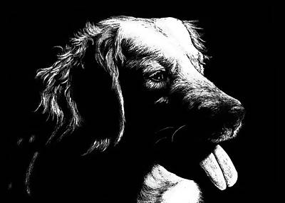 Drawing - Retriever by Monique Morin Matson