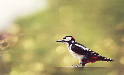 Animales Photograph - Retro Summerbird by Heike Hultsch