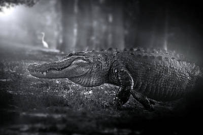 Alligator Photograph - Return Of The King by Mark Andrew Thomas