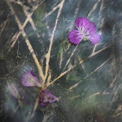 Photograph - Return To Sender #c by Viggo Mortensen