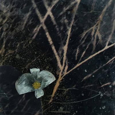 Photograph - Return To Sender  by Viggo Mortensen