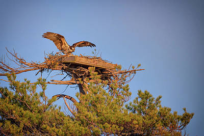 Photograph - Returning To The Nest by Rick Berk