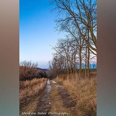 Forest Wall Art - Photograph - Retzer Growing by Andrew Slater