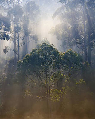 Sunbeams Photograph - Revealed by Mike  Dawson