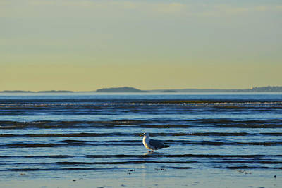 Digital Art - Revere Beach Seagull Revere Ma by Toby McGuire