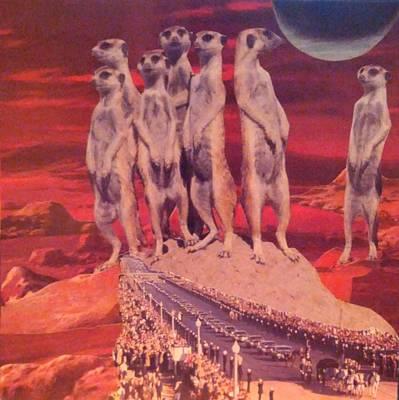 Meerkat Mixed Media - Reverence by Jennifer Schroeder