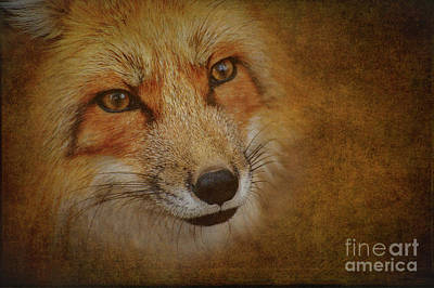 Photograph - Reynard The Fox by Heiko Koehrer-Wagner