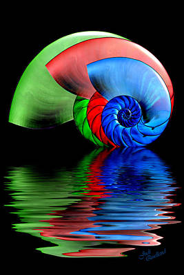 Photograph - Rgb Shells by Judi Quelland