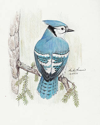 Blue Jay Drawing - Rhapsody In Blue by Heather Hinam