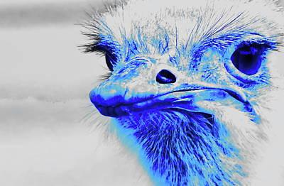 Emu Digital Art - Rheas Alias Nandu by Jean-Louis Glineur