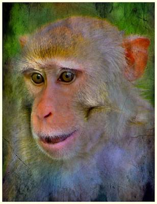 Photograph - Rhesus King by Sheri McLeroy