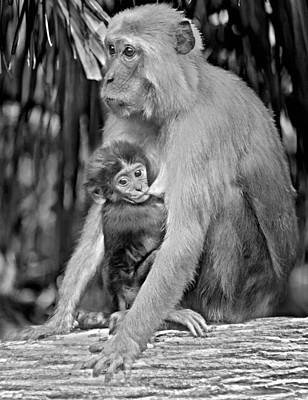 Photograph - Rhesus Mother With Newborn 1 by Sheri McLeroy