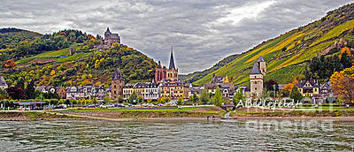 Photograph - Rhine In Fall by April Bielefeldt