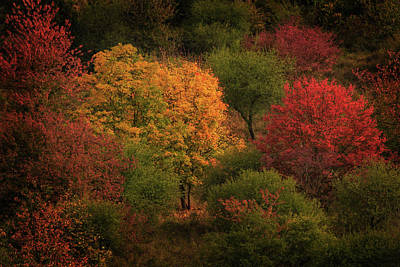 Photograph - Rhine Valley Autumn by Ray Kent