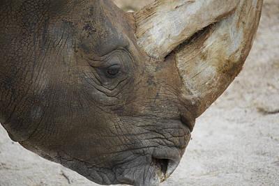 Etnico Photograph - Rhino by Antonio Di Giacomo