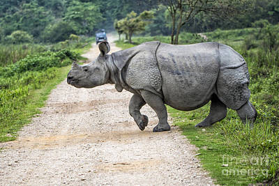 Rhino Crossing Art Print