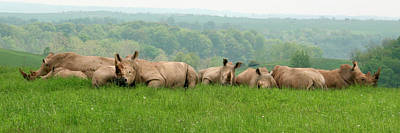 Photograph - Rhino Heard Panarama by George Jones