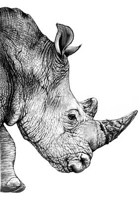 Drawing - Rhino by Heidi Kriel