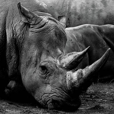 Photograph - Rhino by Kathryn Bell