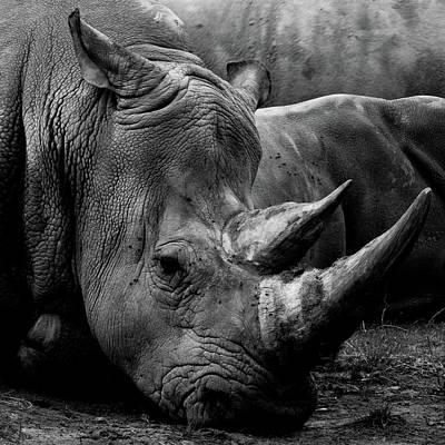 Photograph - Rhino by Kathryn Bell