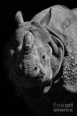 Black Unicorn Photograph - Rhino by Marco Fischer
