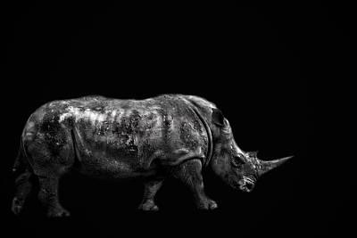 Photograph - Rhino by Mark Perelmuter
