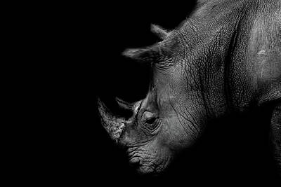 Rhinoceros Photograph - Rhino by Martin Newman