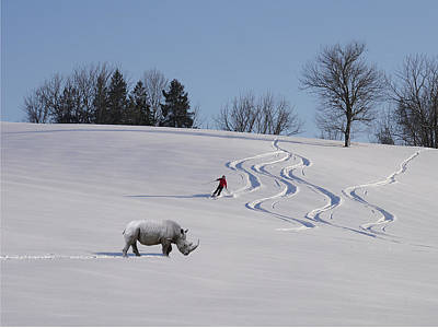 Photograph - Rhino On Piste by Richard Reeve