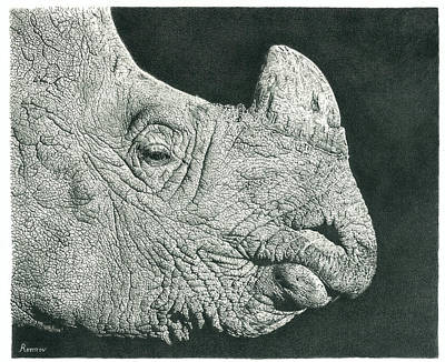 Animals Drawings - Rhino Pencil Drawing by Casey