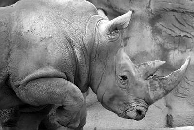Photograph - Rhino Profile by Gordon Dean II