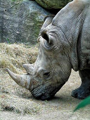 Photograph - Rhino by Susan Lafleur