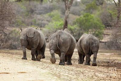 Rhino Trio Art Print