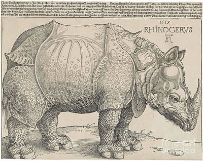 Painting - Rhinoceros by Celestial Images