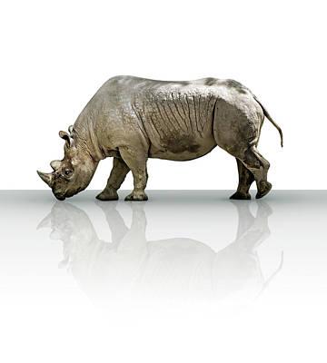 Digital Art - Rhinoceros by James Larkin