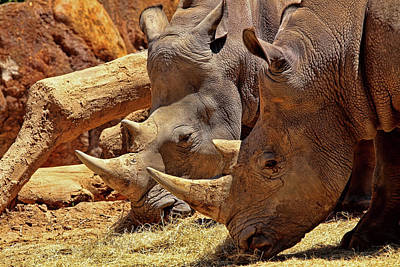 Photograph - Rhinoceros  by Judy Vincent