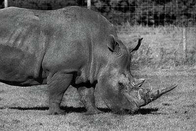 Photograph - Rhinoceros - Knowsley Safari Park by Doc Braham