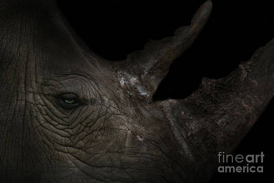 Photograph - Rhinoceros by Lynn Jackson
