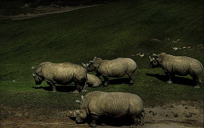 Photograph - Rhinos by Maria Reverberi