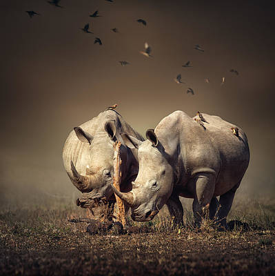 Burnt Photograph - Rhino's With Birds by Johan Swanepoel