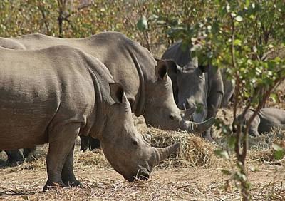 Photograph - Rhinos,  Zambia by Jennifer Wheatley Wolf