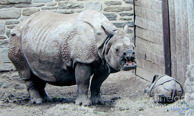 Photograph - Rhinoceros And Baby by Donna Brown