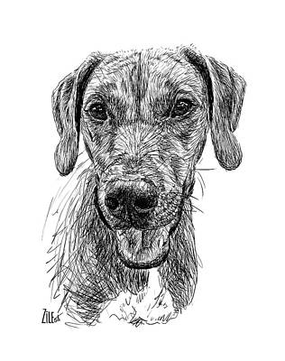Digital Art - Rhodesian Ridgeback @a_pisces_and_a_ridgeback by ZileArt