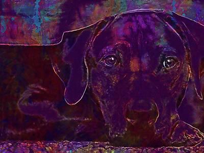 Rhodesian Digital Art - Rhodesian Ridgeback Dog Dog Breed  by PixBreak Art