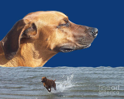 Photograph - Rhodesian Ridgeback by Mary Mikawoz
