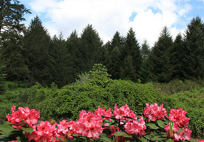 Photograph - Rhodies And Pine Trees by Katie Wing Vigil