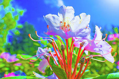 Photograph - Rhodies In The Sun by Adria Trail