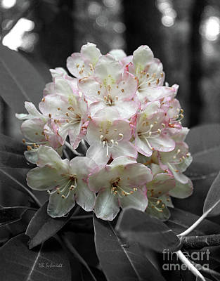 Photograph - Rhododendron 02 by E B Schmidt